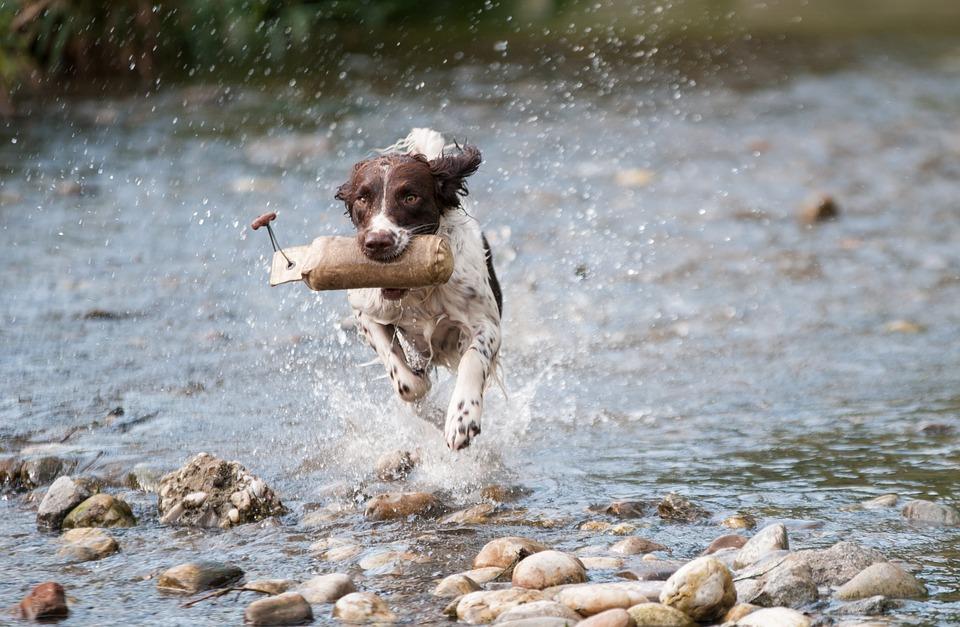 Så mycket motion behöver din hund